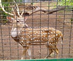 creatures, safari, and animal image