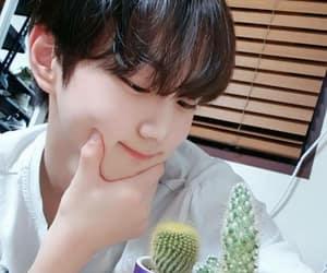 cacti, kpop, and yang jungwon image