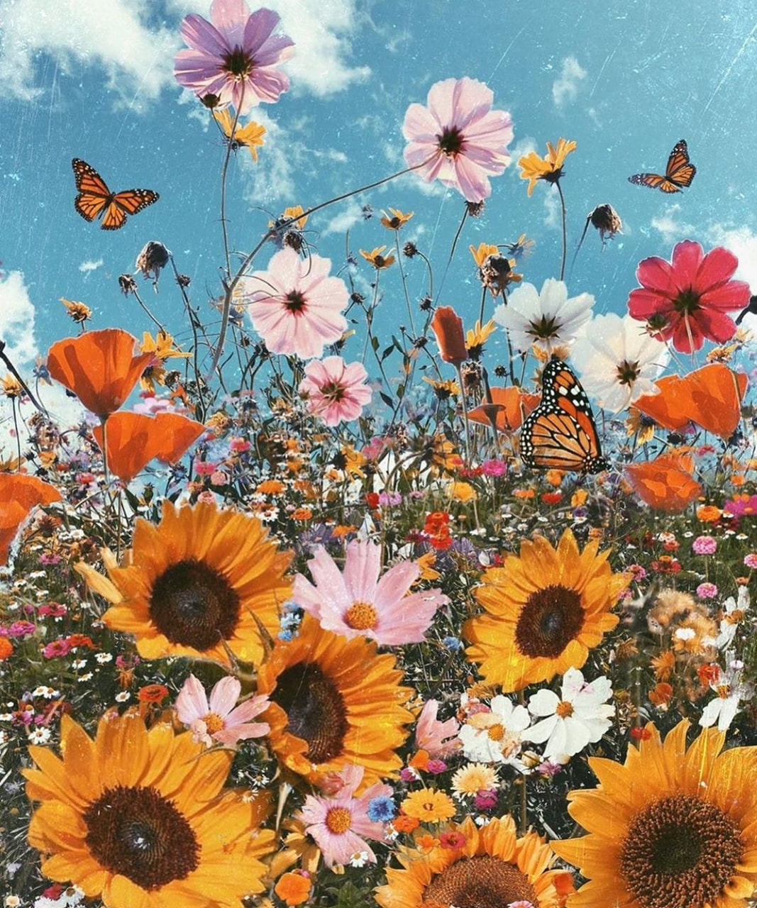 article, butterflies, and flowers image