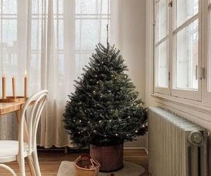 christmas, christmas lights, and christmas cookies image