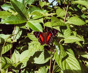 Animais, butterflys, and nature image