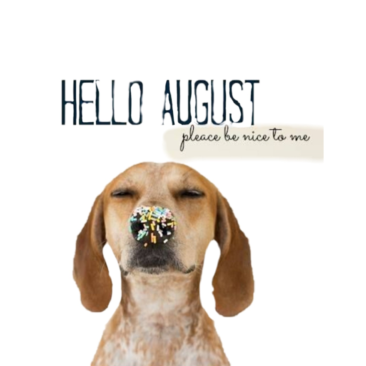 August, hello, and inspiration image