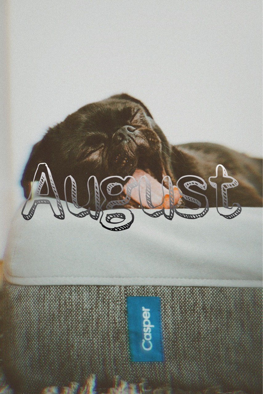 August, dog, and hello image