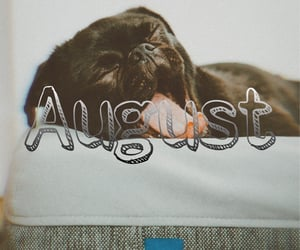 dog, August, and hello image