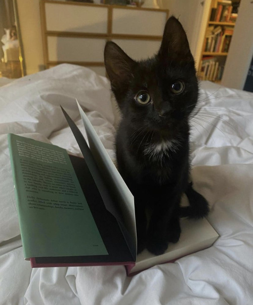 animal, cat, and books image