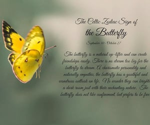 astrology, butterfly, and celtic image