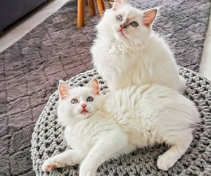 animals, meow, and pets image