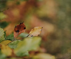 Halloween, autumn, and leafs image