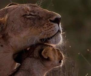 animal, animals, and leon image