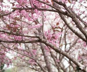 Cherry Blossoms, Spring 2021 /  Quelle: millivedder.tumblr.com