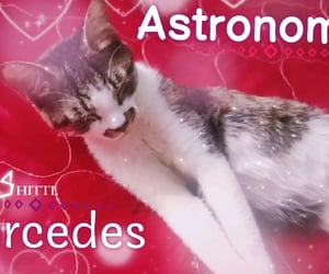 astronomia, kitty, and cute image