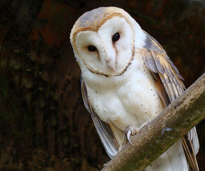 owl, nature, and white owl image