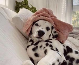 animals, details, and dog image