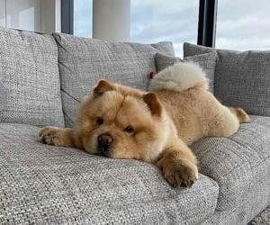 animal, dog, and puppy image