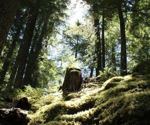 deep, fantasy, and stump image