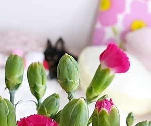 afternoon, bouquet, and dog image