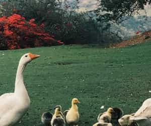 animals, duck, and paisagem image