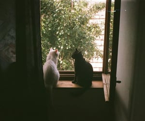 animals, cats, and day image