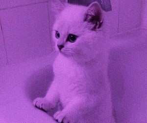 aesthetic, kitty, and purple image