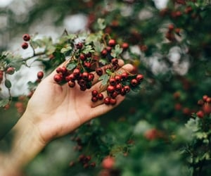 fall, autumn, and natural image