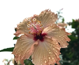 aesthetic, flowers, and rain image