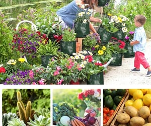 article, home gardening, and planet friendly image