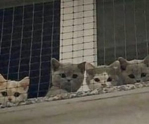 cat, header, and kitten image