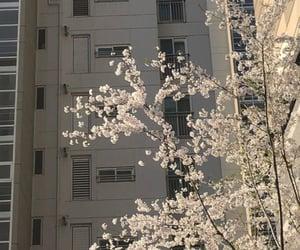 aesthetics, flowers, and tree image