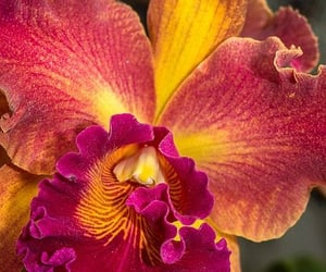 flores, flowers, and orchids image