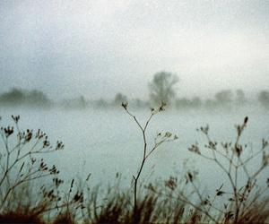 analog, film, and landscape image