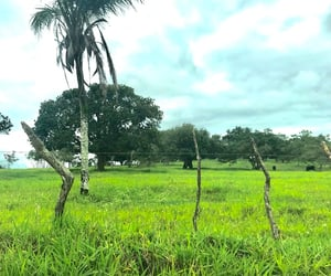 farm, nature, and green image