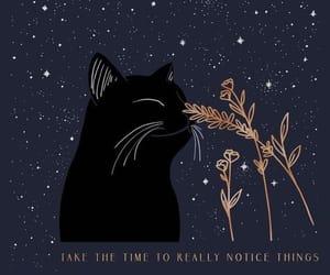 animal, cat, and night image