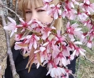 cerejeira, kim, and paisagem image