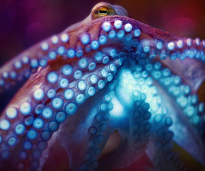 octopus and photography image