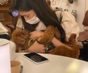 dog, yukika, and kpop image
