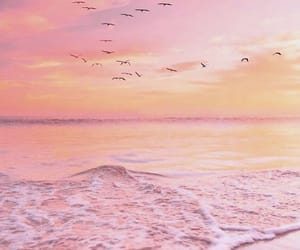 pink, beach, and birds image