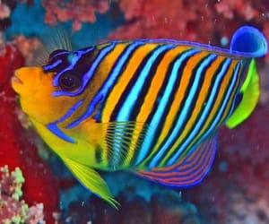 angelfish and sea fish image