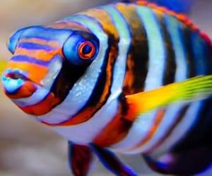 goldfish image