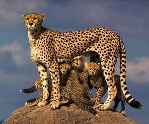 animals, nature, and family image