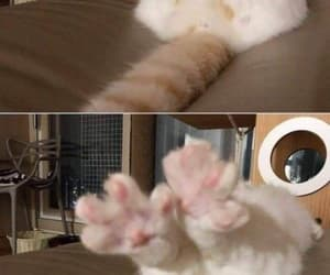 before and after cat image