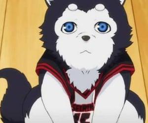 anime, pets, and knb image