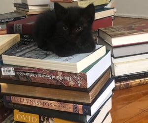 adorable, books, and cats image