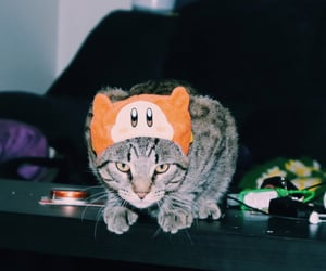 cat, gaming, and japan image