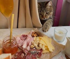 cat, honey, and wine image