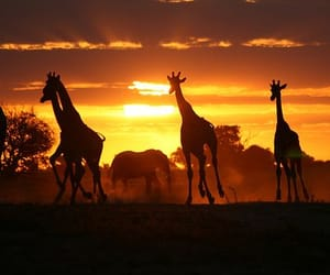 silhouette and african silhouette image