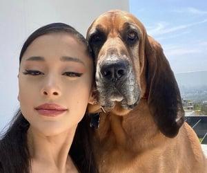 ariana grande, dog, and singer image
