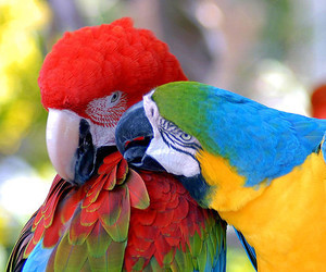 parrot, bird, and animal image