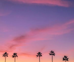 aesthetic, lilac, and palms image