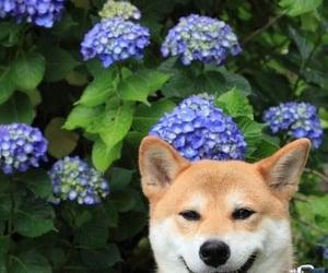 dog, hydrangea, and puppy image