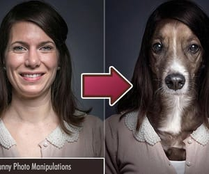 funny, funny picture, and photomanipulation image